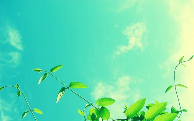 葉子ppt背景圖片 兩張藍天白云下唯美植物ppt背景圖片