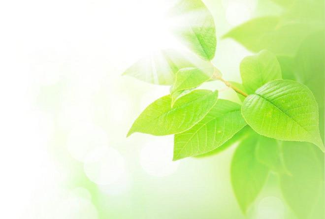 绿色背景背景图片 两张黄绿色漂亮树叶ppt背景图片